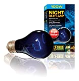 Exo-Terra Night Heat Lamp, 100 Watt