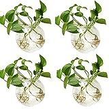 ZQH 4 PCS Wall Colgando plantadoras de Vidrio, Vidrio Redondo Potes de Planta de Vidrio Planta de contenedor para propagación de Plantas hidropónicas Decoración de jardín,B