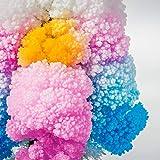 MAGIC TREE Wachsen Sie Ihre Kristall Blumen - 5