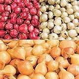 Mix, Red,Yellow,White,Onion Sets...