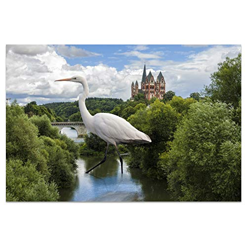 Ansichtkaarten +++ DIN A6 LIMBURG motief: ongewone vogel I stadhoeken I hoogwaardige kaarten I leven & momenten grappig I ansichtkaarten postcrossing I geschenk I cadeau-idee
