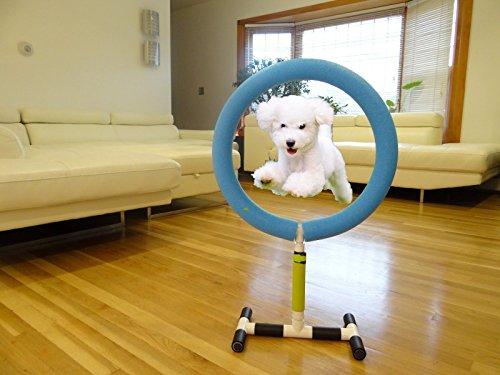 Hoop Dog Agility Training Jump Indoor Outdoor Pet Show Equipment