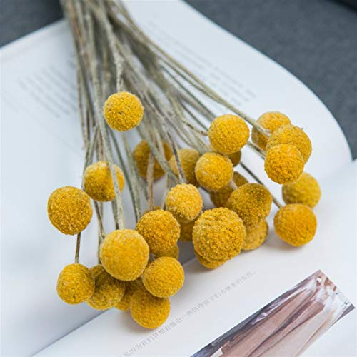 "JSJJAES Flores Artificiales Flores de craspedia Natural secas, Bolas de botón de Billy, 16""-20 '' Altura (Color : Yellow, Size : 50 Pieces)"