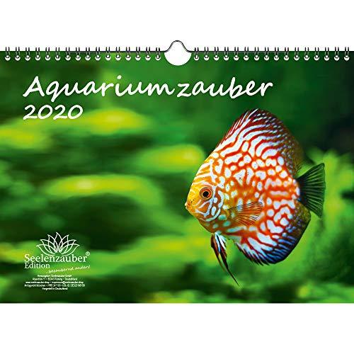 Aquariumzauber DIN A4 Kalender 2020 Tiere im Aquarium und Unterwasser Geschenk-Set: Zusätzlich 1 Gruß- und 1 Weihnachtskarte - Seelenzauber