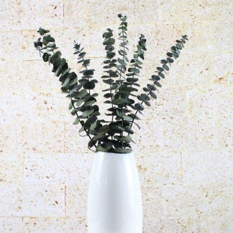Konservierte Eukalyptus Zweige - 4