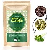 VERDANT REPUBLIC Brócoli orgánico CALABRESE Semillas de germinación 500g con alto contenido de sulforafano | Sin OMG | Fácil de germinar en brotes en 5 días y microgreens en 10 días.