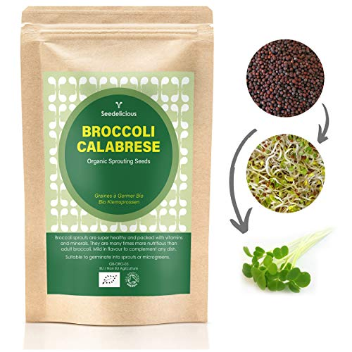 Organic BROCCOLI CALABRESE Sprouting Seeds 500g by Verdant Republic | High Sulforaphane Content | Non-GMO | Easy to Sprout in 5 Days| High Germination into Microgreens in 10 days
