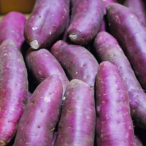 千葉県産 紫芋 パープルスイートロード Lサイズ 5kg(12〜15本)