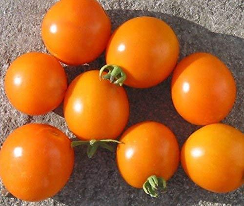 5 paquets de 25 graines d'Orange Plum