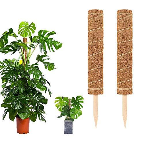 Daiwen 2 pcs Support Tuteurs pour Plantes Grimpantes Tuteur en Fibre de Coco, pour Extension De Support De Plante Grimpante
