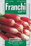 Franchi Samen Radieschen Flamboyant -