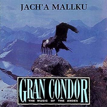 Gran Condor