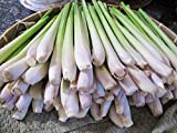 Lemongrass Fresh 12 Stalks from TastePadThai