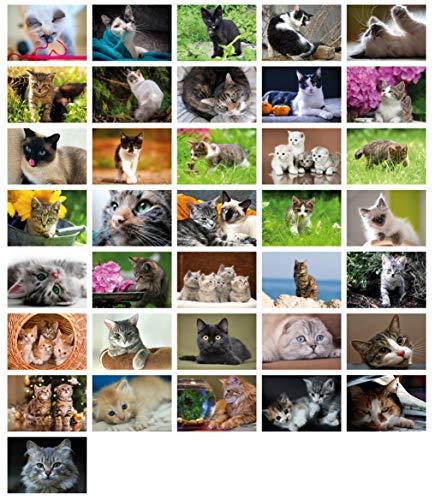 Clever Pool: 36 einfallsreiche Postkarten mit einzigartigen Katzenmotiven | ausgewählte Designs und Motive | Sammelspaß für Jung und Alt | ein Postcrossing Set zum Verlieben