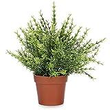 Kunstpflanze im Topf mit kleinen Blättern für Zuhause und Büro