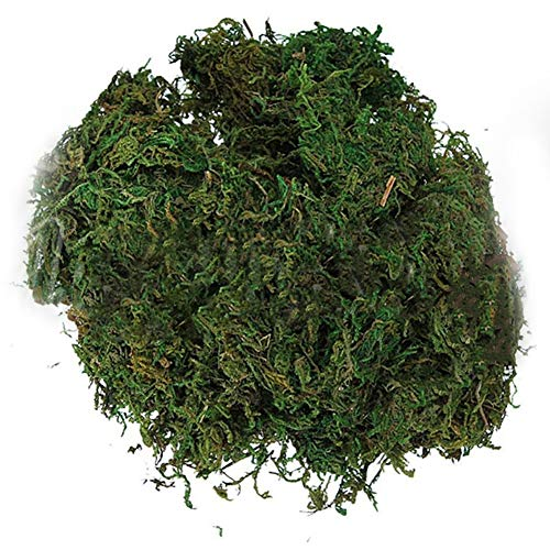 Aland 100g Natural Dried Reindeer Moss Plant Turtle Warm Keeping Bonsai Garden Decor Wedding Home Decoration 100G/Bag