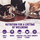 Wellness Natural Pet Food Complete Health Grain Free Canned Cat Food
