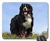 Gaming-Mauspads, Mauspad, Berner Sennenhund Animal Picture Dog Mountains