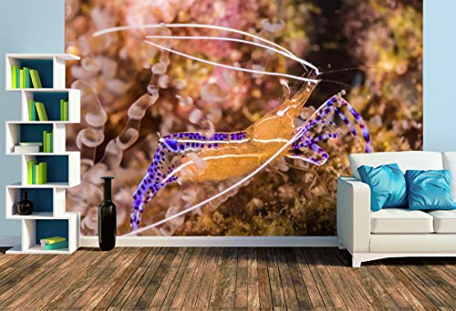 Premium Foto-Tapete Pederson Putzergarnele (versch. Größen) (Size L | 372 x 248 cm) Design-Tapete, Wand-Tapete, Wand-Dekoration, Photo-Tapete, Markenqualität von ERFURT