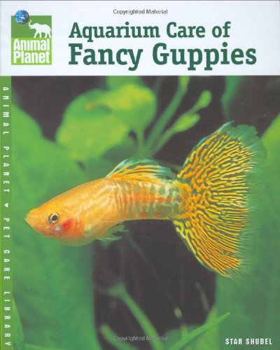 Aquarium Care of Fancy Guppies