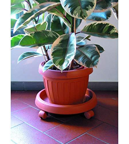 Bama Plant Piattini Con Ruote,