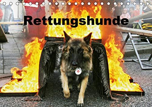 Rettungshunde (Tischkalender 2021 DIN A5 quer)