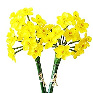 Calcifer 2 Bunches Latex Artificial Daffodils Bulbs Flowers Bouquet for Home Garden Wedding Party Decoration (Style A, Yellow)