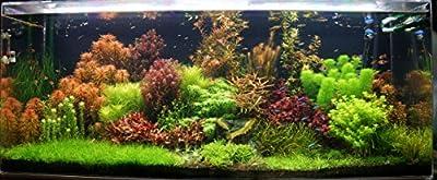 25 Live Aquarium Plants -Collection of Tropical Aquatic Plants for your fish tank from Biotope Aquatics Ltd