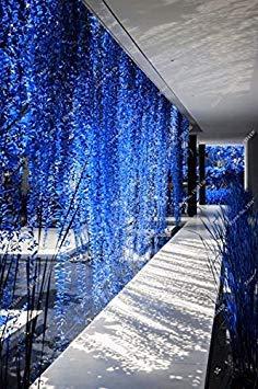 Vistaric 50Pcs Dichondra Repens Silver Falls Emerald Falls Graines succulentes dans des paniers Suspendus très créatives de Belles Plantes en Pot 8