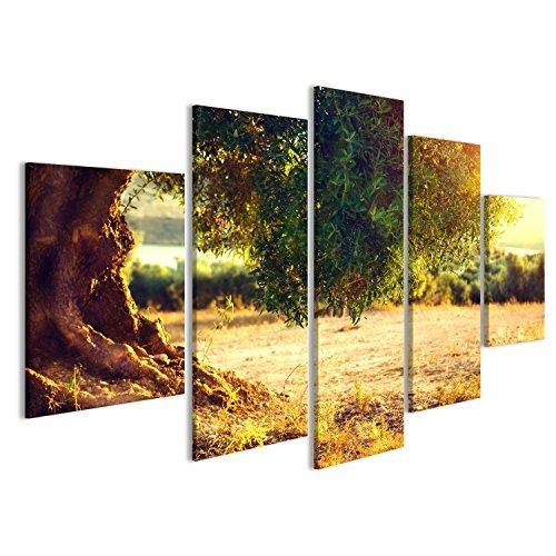 islandburner Bild auf Leinwand Olivenbäume. Anpflanzung von Olivenbäumen bei Sonnenuntergang. Mittelmeer-Olivenfeld mit altem Olivenbaum. Gemüseproduktindustrie. Saisonale Natur Wa