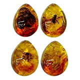 VORCOOL Amber Fossil with Insects Samples Stones Crystal Specimens Home Decorations Collection Oval Pendant for Kids (Random Pattern)