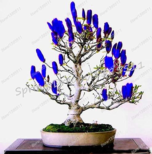 Shopmeeko 10 stücke Magnolia blume bonsai seltene pflanzen, Bonsai organische baum Rosa Magnolie Bonsai Balkon bonsai Topf DIY hausgarten: 1