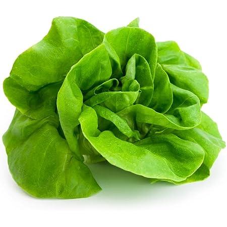 1 Ounce 2021 Seeds  Garden or Micros Buttercrunch Lettuce Seeds 22,000