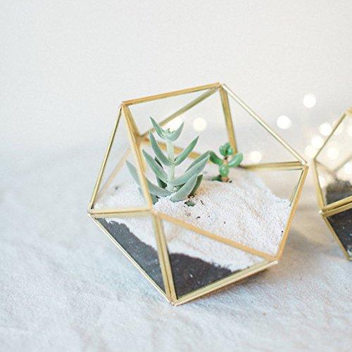 Bellas garden Geometric Terrarium Container Desktop Planter for Succulent Fern Moss Air Plants Holder Miniature Outdoor Fairy Garden Gift Wedding Ring Glass Box (Medium, Gold)