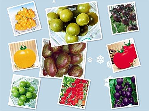 Promotion 200pcs / sac TOMATE GRAINES semences Cerise Pêche Poire Tomate, plantes Violet Noir Jaune Vert Non-GM Organic Bonsai alimentaire