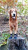 Bark Brite All Weather Neoprene Paw Protector Dog Boots with Reflective Straps in 5 Sizes! (Lg)...