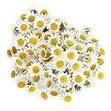 Liadance Mini Daisy Artificial Heads Seda Gerbera falsificación Flor del Libro de Recuerdos Tarjeta Decoración 100PCS