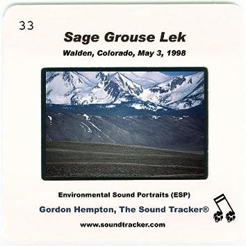 Sage Grouse Lek