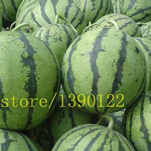 20 graines de pastèque rares bleu graines de fruits de pastèque pour le corps NO-OGM des semences patrimoniales de fruits