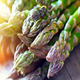 Jersey-Supreme 5 Live Asparagus Bare Root Plants -2yr-Crowns from Hand Picked Nursery