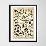 Antike Käfer Vintage Vielzahl von Insekten Wissenschaft