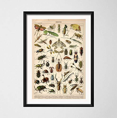 Antike Käfer Vintage Vielzahl von Insekten Wissenschaft Chart Käfer Bienen Kunst Malerei Leinwand Poster Wand Wohnkultur 30X42 cm Ohne Rahmen