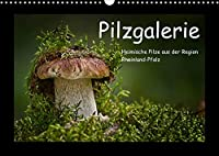 Pilzgalerie - Heimische Pilze aus der Region Rheinland-Pfalz (Wandkalender 2022 DIN A3 quer): 13 beeindruckende Pilzaufnahmen (Monatskalender, 14 Seiten )