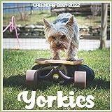 Yorkies Calendar 2021-2022: April 2021 Through December 2022 Square Photo Book Monthly Planner Yorkies, small calendar