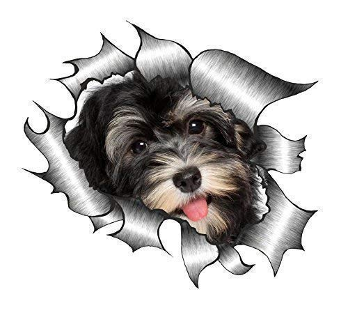 Sticar-it Ltd ZERRISSENES METALL Auto-aufkleber süß Havaneser Welpe Hund design Vinyl decal - Multi, Small 105x130mm approx