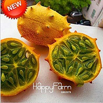 Fash Lady Stérilisation semences de légumes, ail, graines de poireaux - 100 pcs/lot