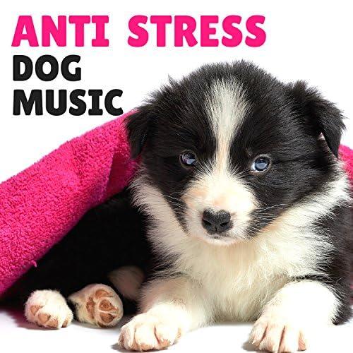 Anti Stress Dog Music