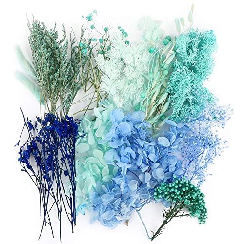 UFLF Flores Secas Preservadas, Flores Naturales Secas Reales con Caja para Joyería de Resina Scrapbooking, Decoraciones Florales de Bricolaje Artesanía