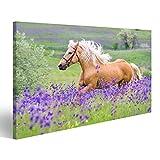 islandburner Bild auf Leinwand Palomino Pferd mit Langen