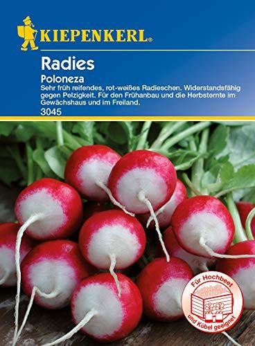 Radieschen Poloneza, sehr früh reifendes rot-weißes Radieschen, Wiederstandsfähig gegen Pelzigkeit, für Gewächshaus und Freiland